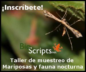 banner_mariposas_1